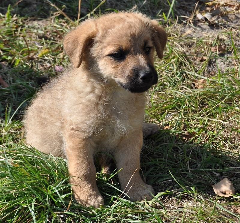 mały pies - szczeniak na trawie